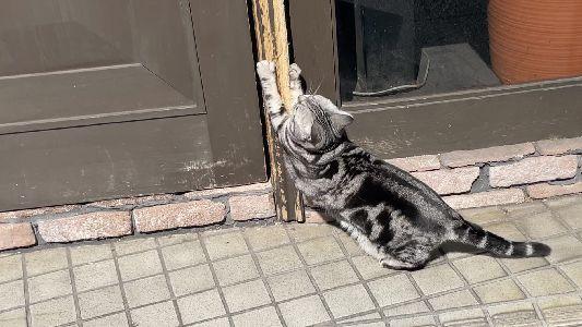 縞猫.jpg